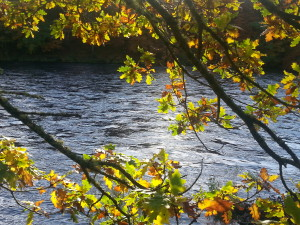 leaves and water 2 (1)